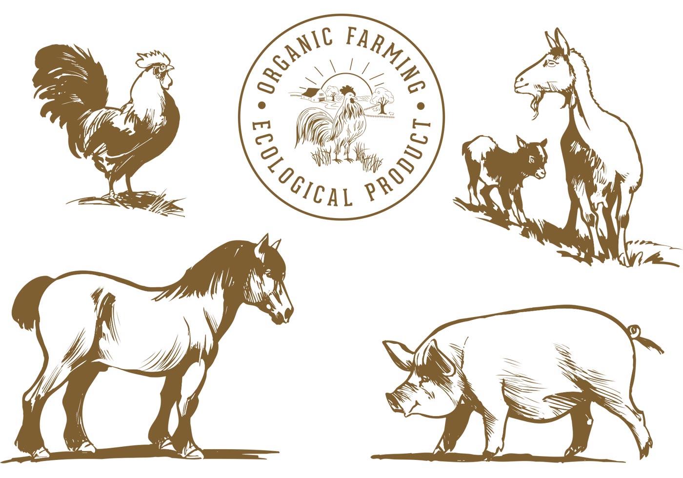 farm animals vector pack - download free vector art, stock graphics