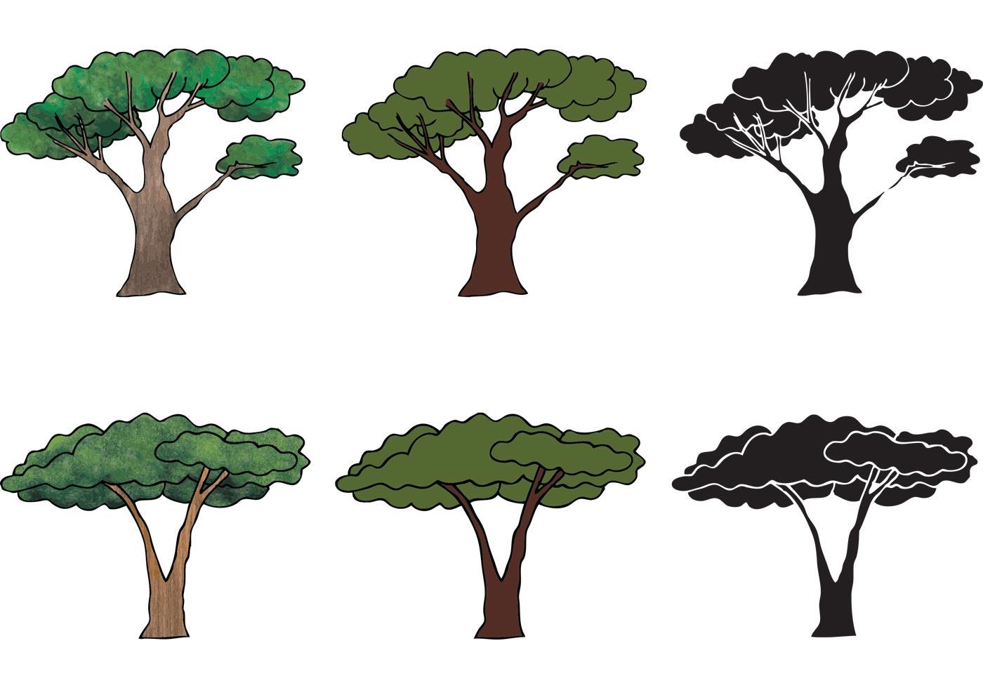 Vector Illustration Tree: Free Acacia Tree Vector Series