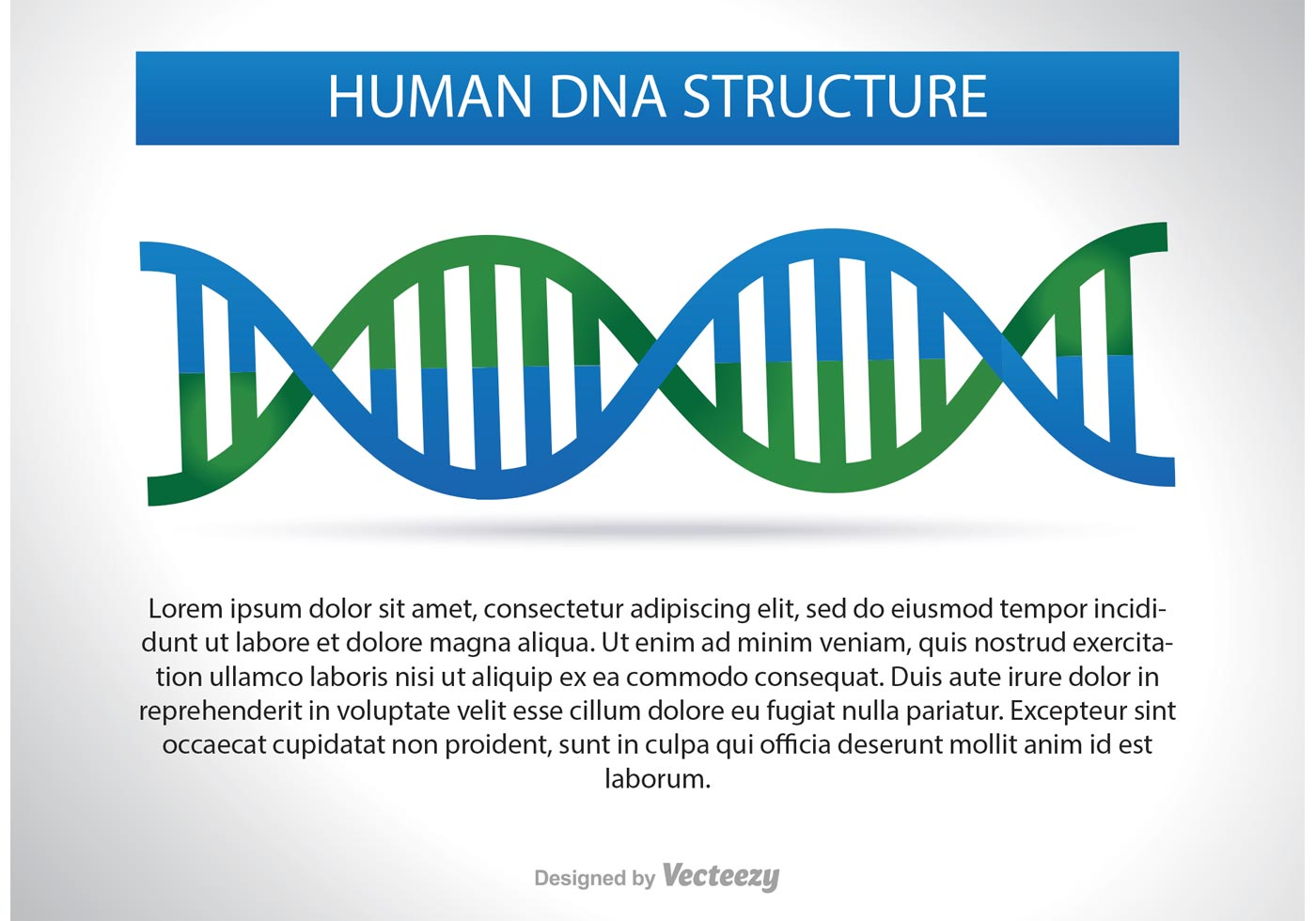 dna structure illustration download free vector art Funny Weight Lifting Clip Art Funny Weight Lifting Clip Art