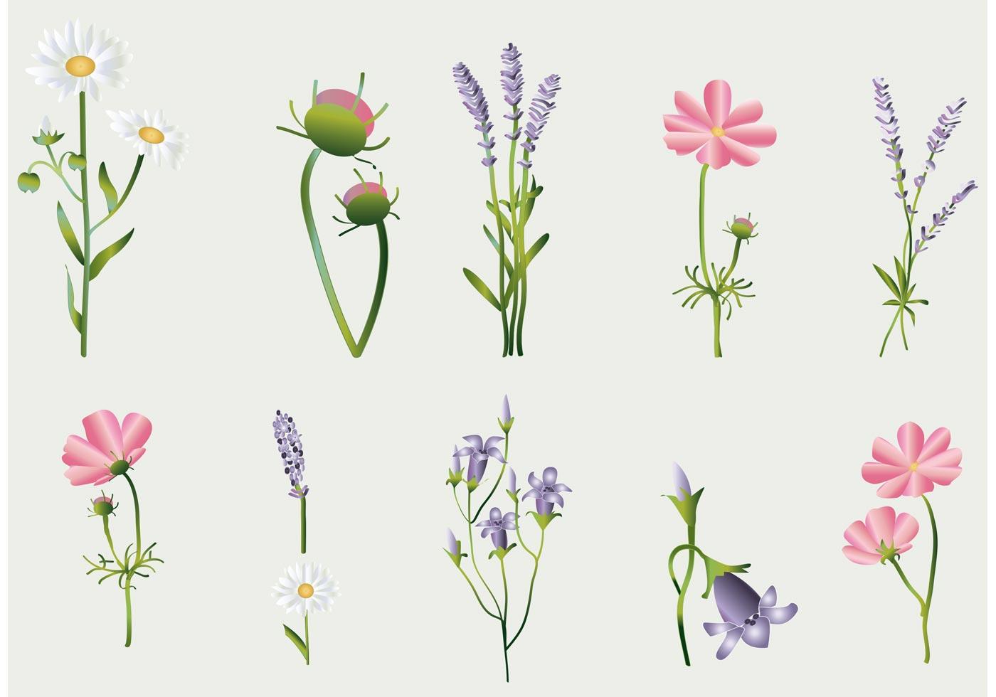 Flower Vectors Collection Download Free Vector Art