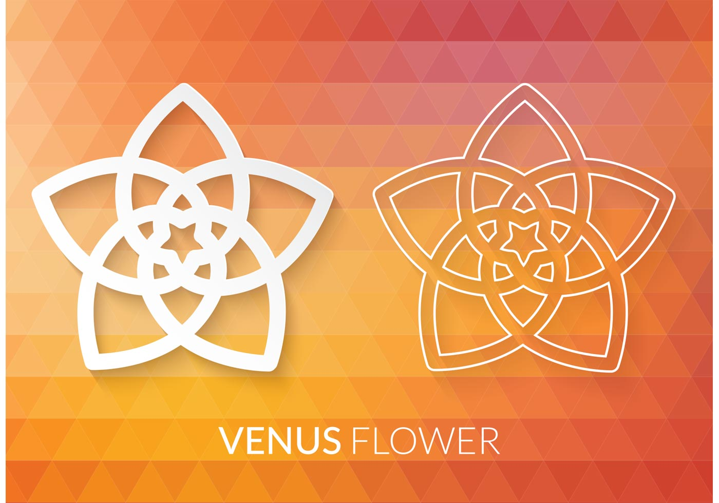free vector venus flower pentagram download free vector