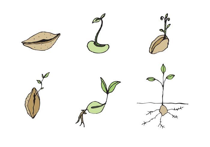 Série de vecteur de graines gratuites