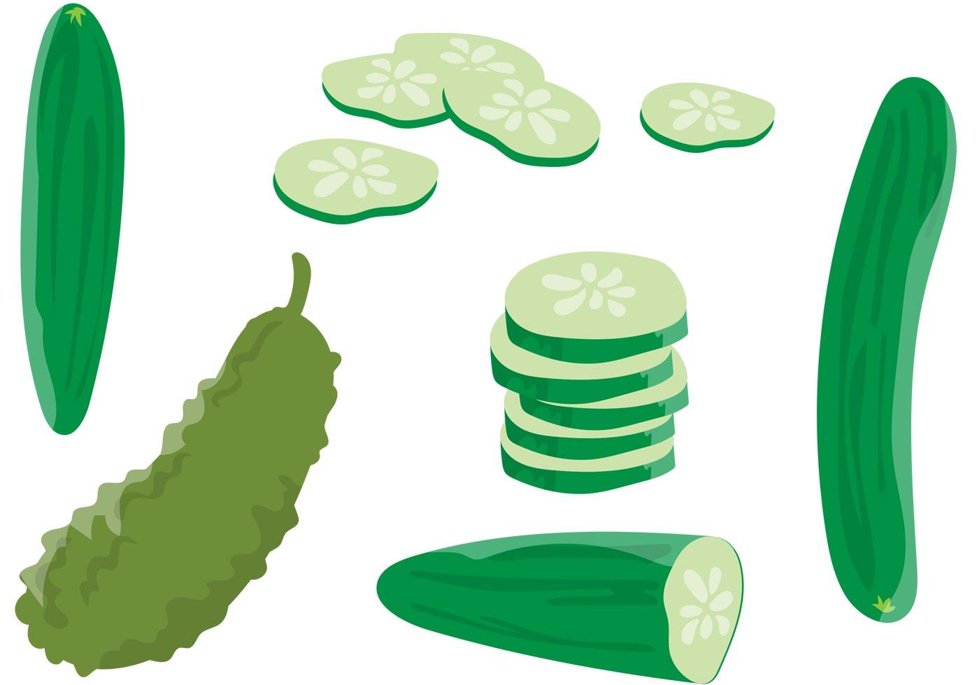 Cucumber Vectors - Download Free Vectors, Clipart Graphics ...