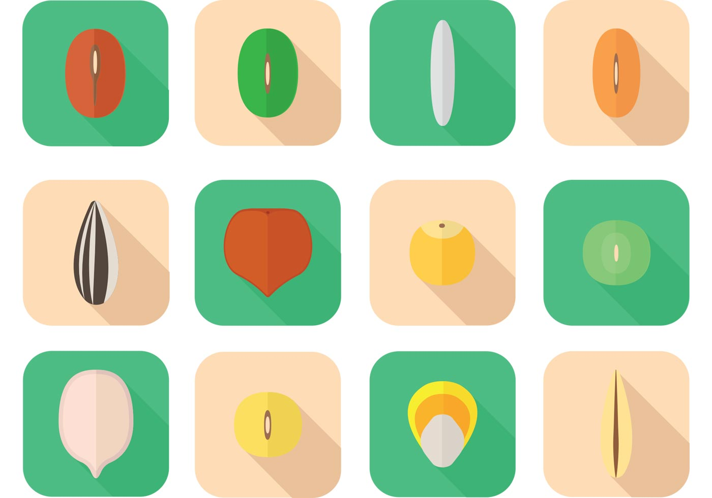 various seed vectors download free vector art stock