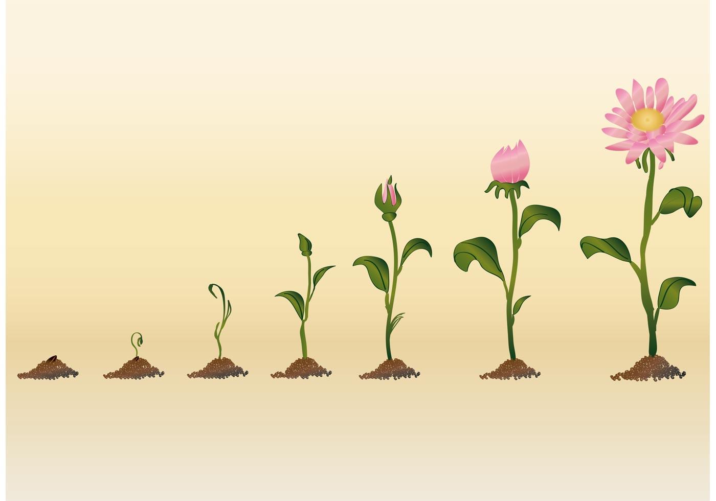 developing flower