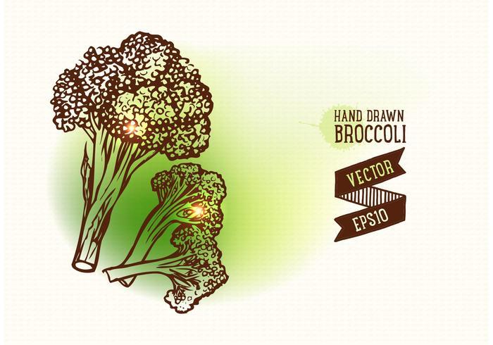 Gratis handdragen Broccoli Vector Illustration