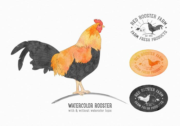 Free Vector Rooster Set