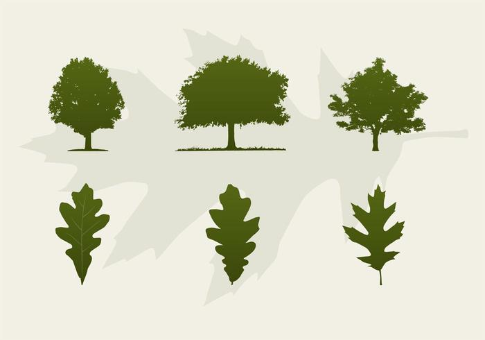 Oak Tree Vector Free Download Oak Trees And Leaves V...