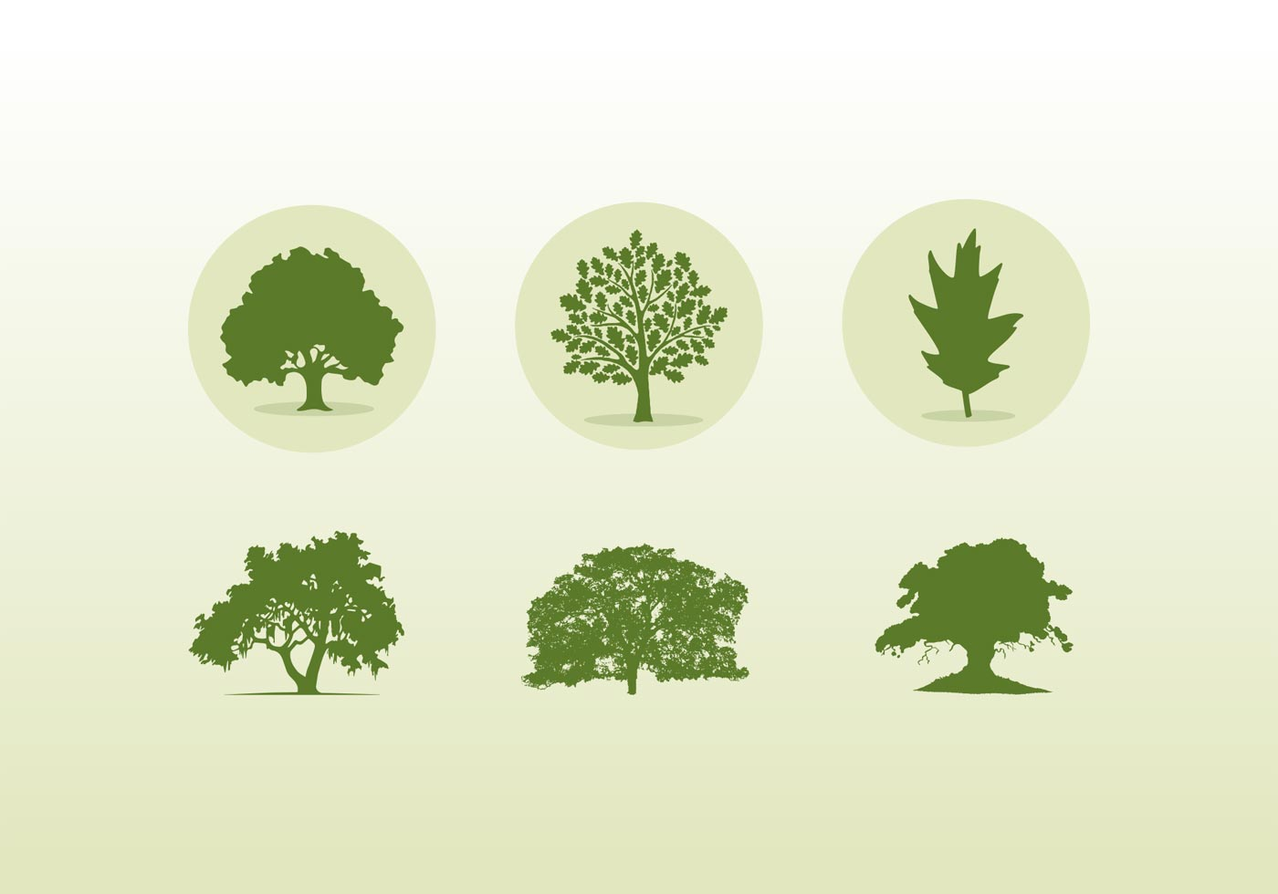 Oak Tree Vector Free Download Various Oak Trees Icon...