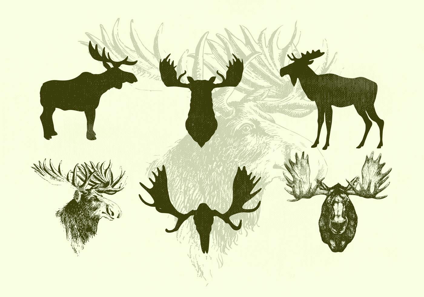 Standing Moose and Moose Heads Vector Silhouettes ...