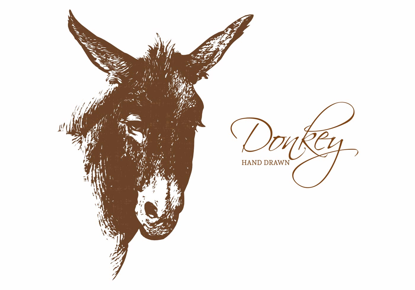 Hand Drawn Donkey Portrait Vector - Download Free Vector Art, Stock