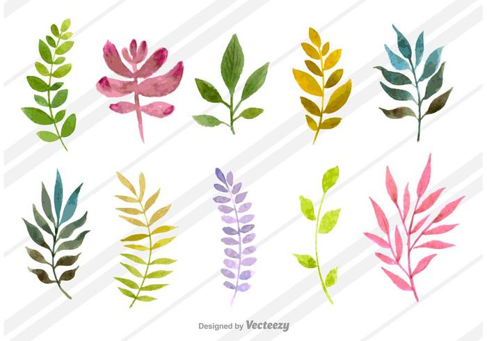 Natural Watercolored Dills vector