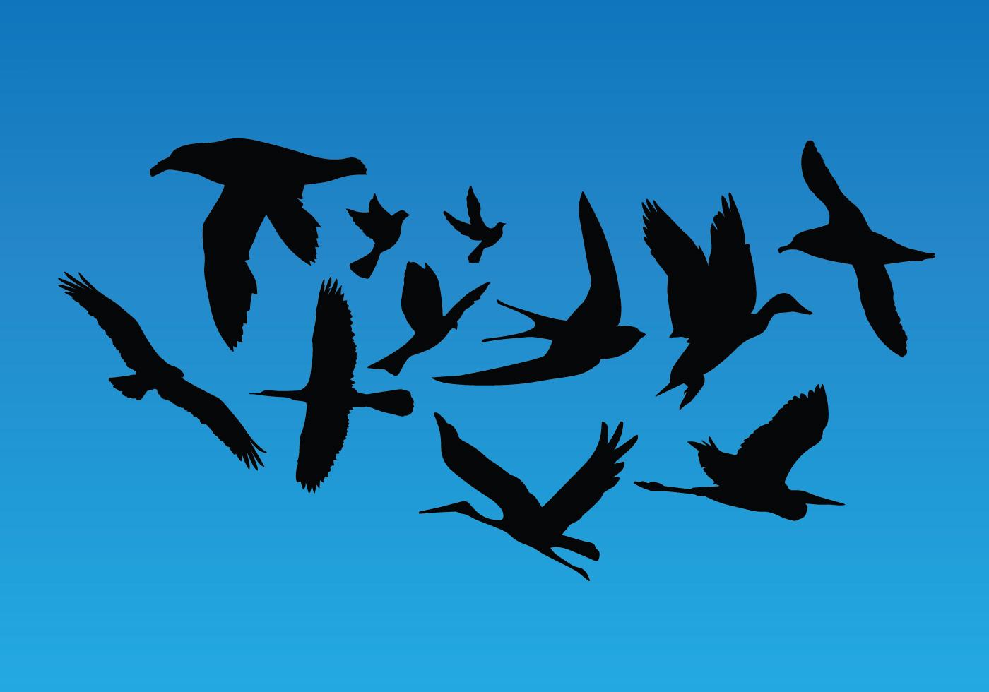 Flying Birds Vector Pack - Download Free Vector Art, Stock Graphics & Images