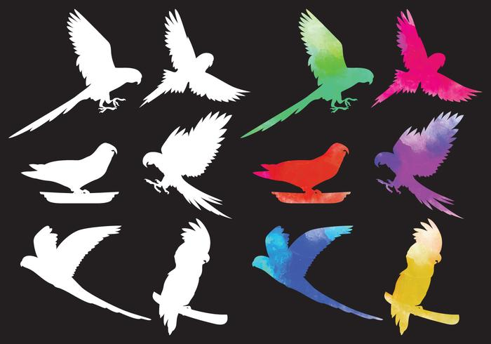 Vectores tropicales de la silueta del pájaro