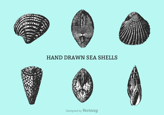 Free Hand Drawn Shells Vector
