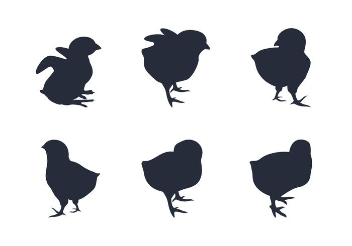 Chick Silhouette Vectors