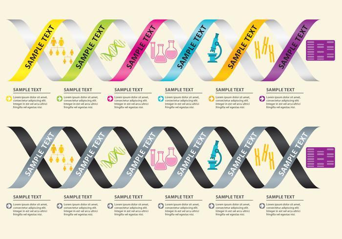 Vecteurs d'infographie de l'ADN