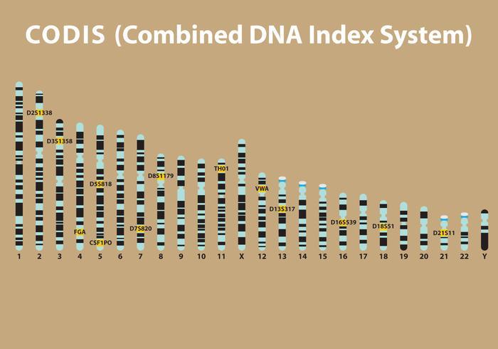Vector DNA Codis