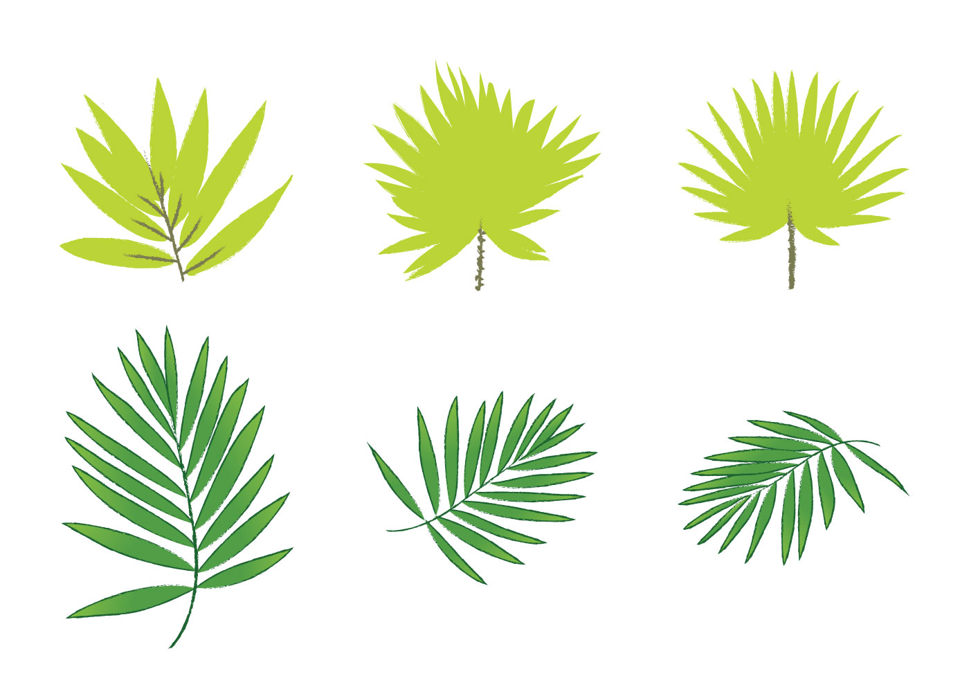 Free Palm Leaf Vectors - Download Free Vector Art, Stock ... - photo#37