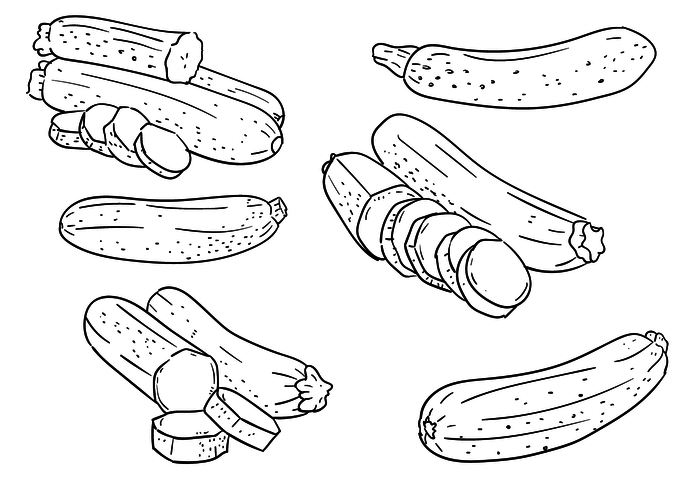 Zucchini Outlines Vector Set