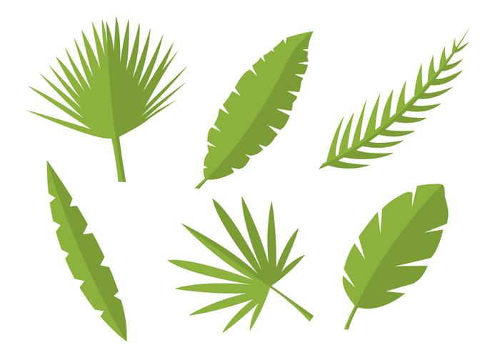 Leaf Vectors