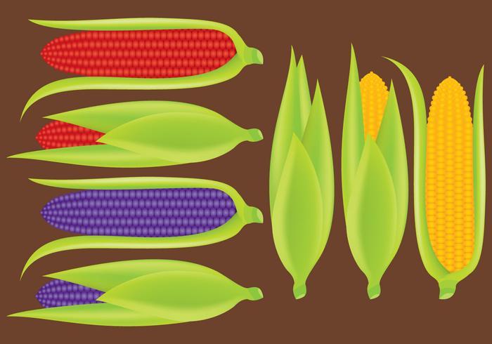 Ears of Corn Vectors
