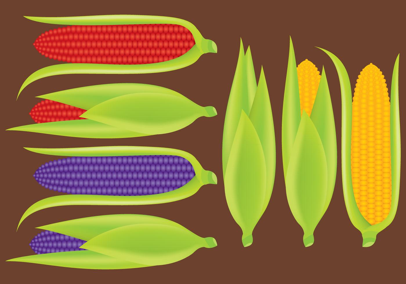 corn stalk template - ears of corn vectors download free vector art stock