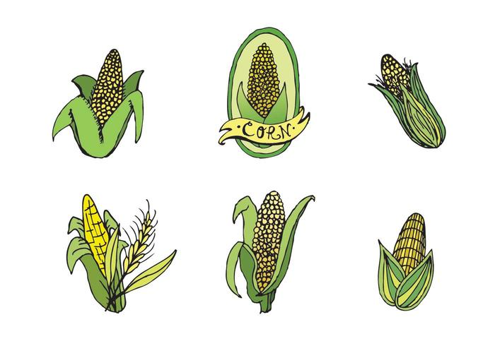 Free Ear of Corn Vector Series