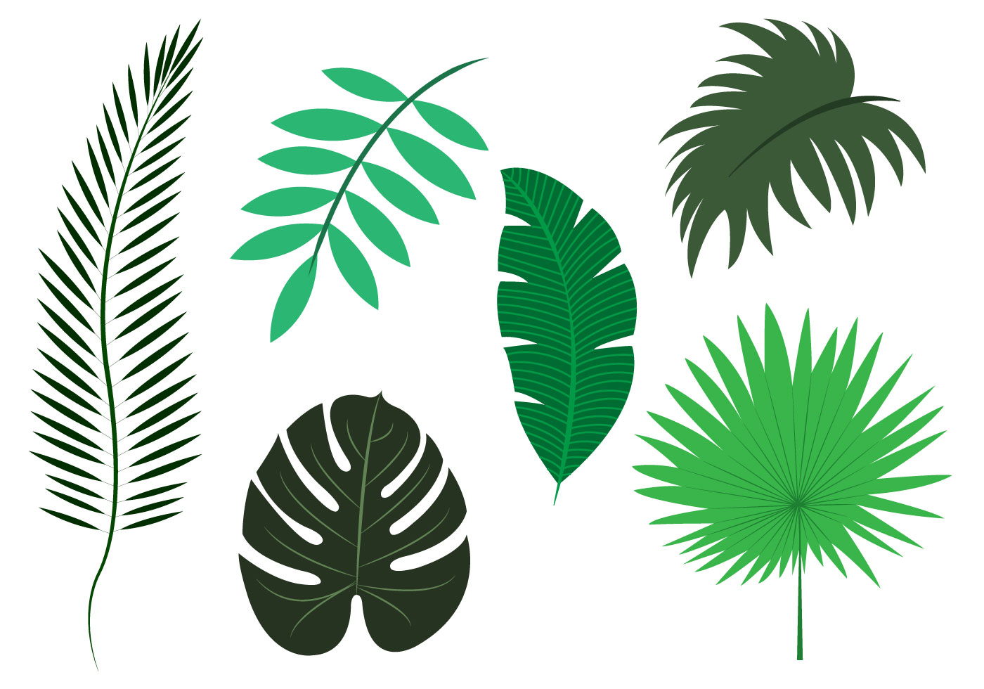 clip art palm tree leaf - photo #47
