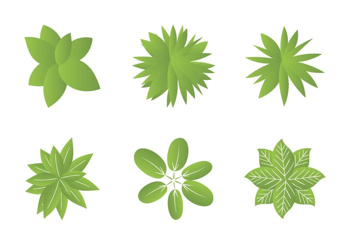 Free Plant top view Vector Illustrations