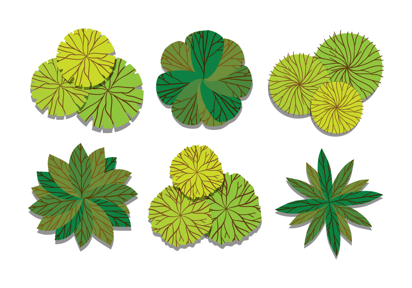 Plant Top View Vector in Group - Download Free Vector Art ...