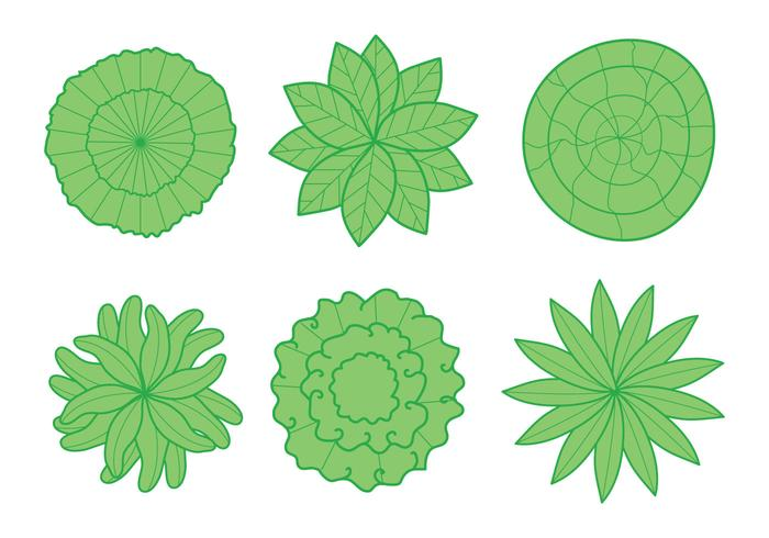 Plant Top View Vector