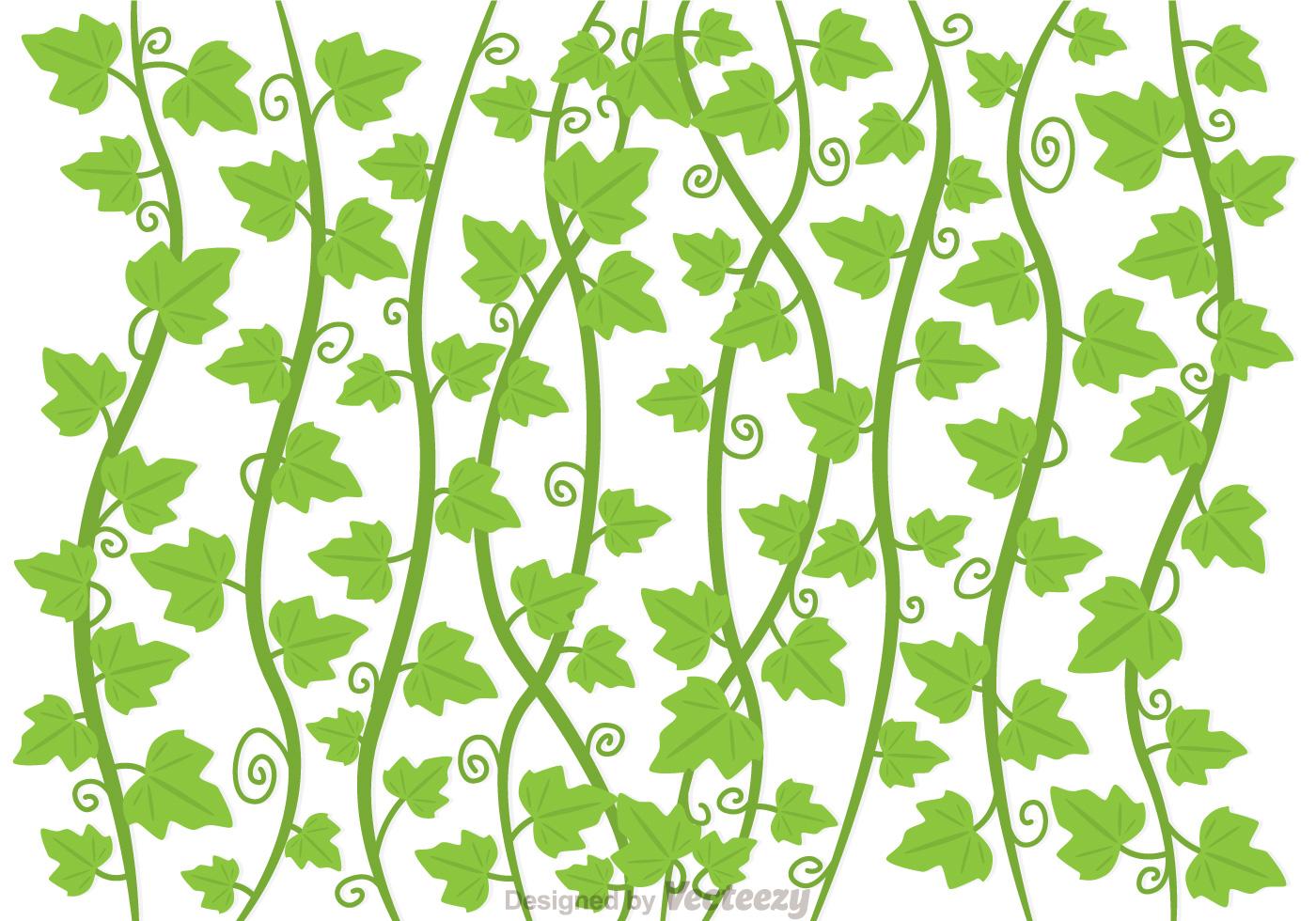 Ivy Vine Vector - Download Free Vectors, Clipart Graphics ...