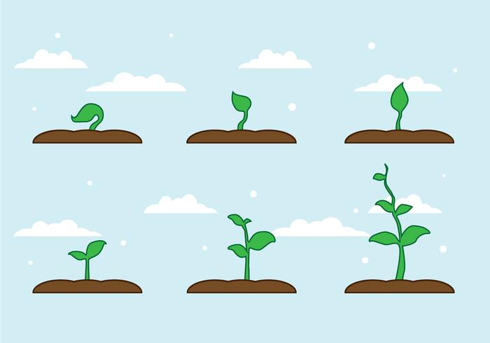 FREE PLANT GROWTH VECTOR