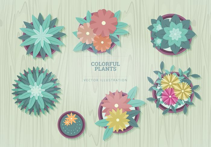 Växter Vektor Illustrationer