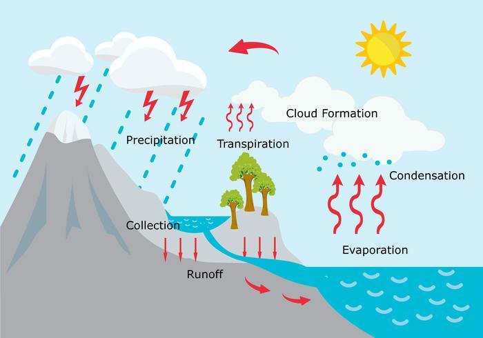 Ilustración Ciclo... Water Cycle Runoff