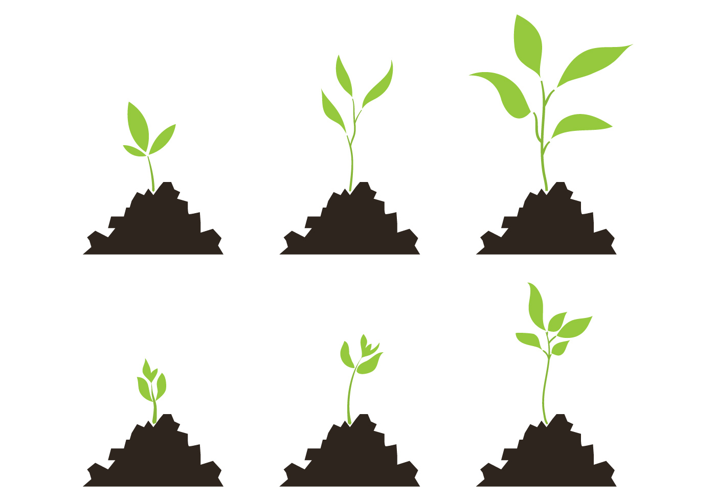 98990 Vector Set Of Plant Growth Scale on Plant Life Cycle Clip Art