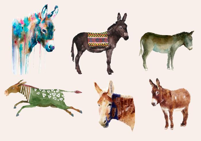 Donkey watercolor