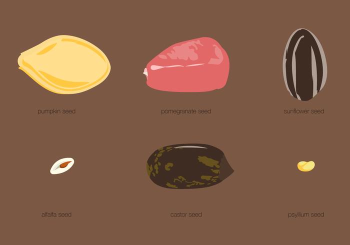 Conjunto de tipos de sementes