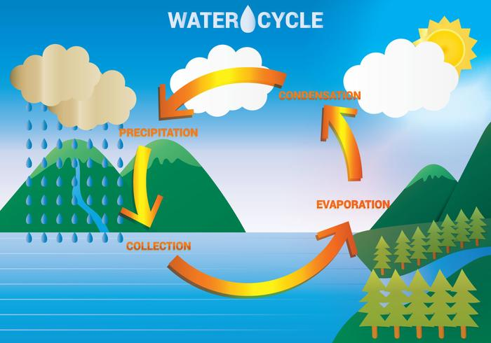 Water       Cycle       Diagram    Vector  Download Free Vector Art  Stock Graphics   Images