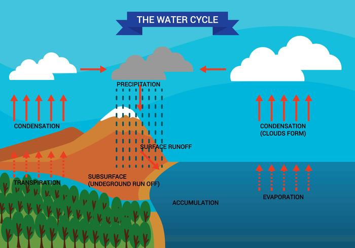 Water Cycle Free Vector Art - (5465 Free Downloads)