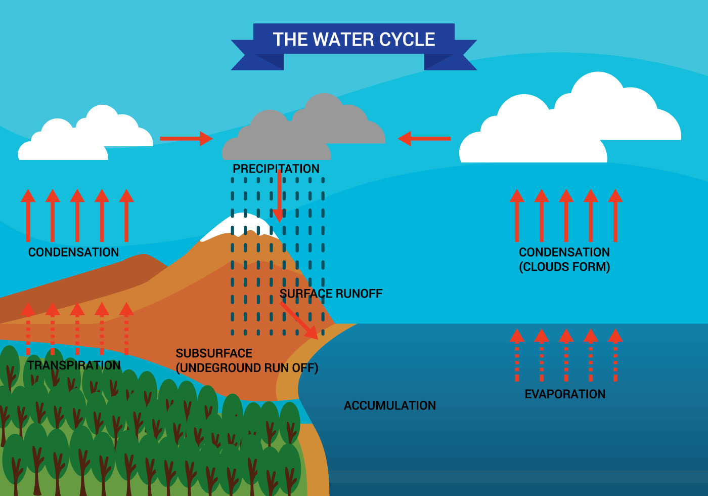 Water Cycle Diagram Vector