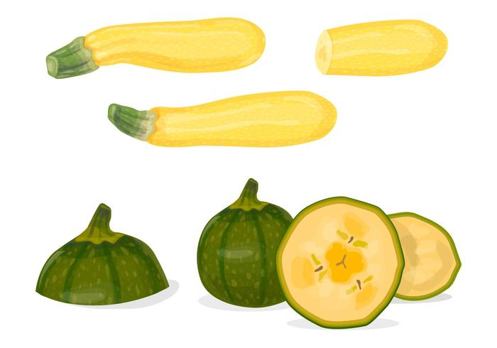 Green and yellow zucchini vectors