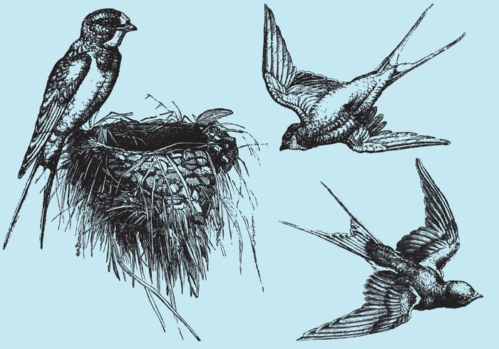 Woodcut Swallow Vectors
