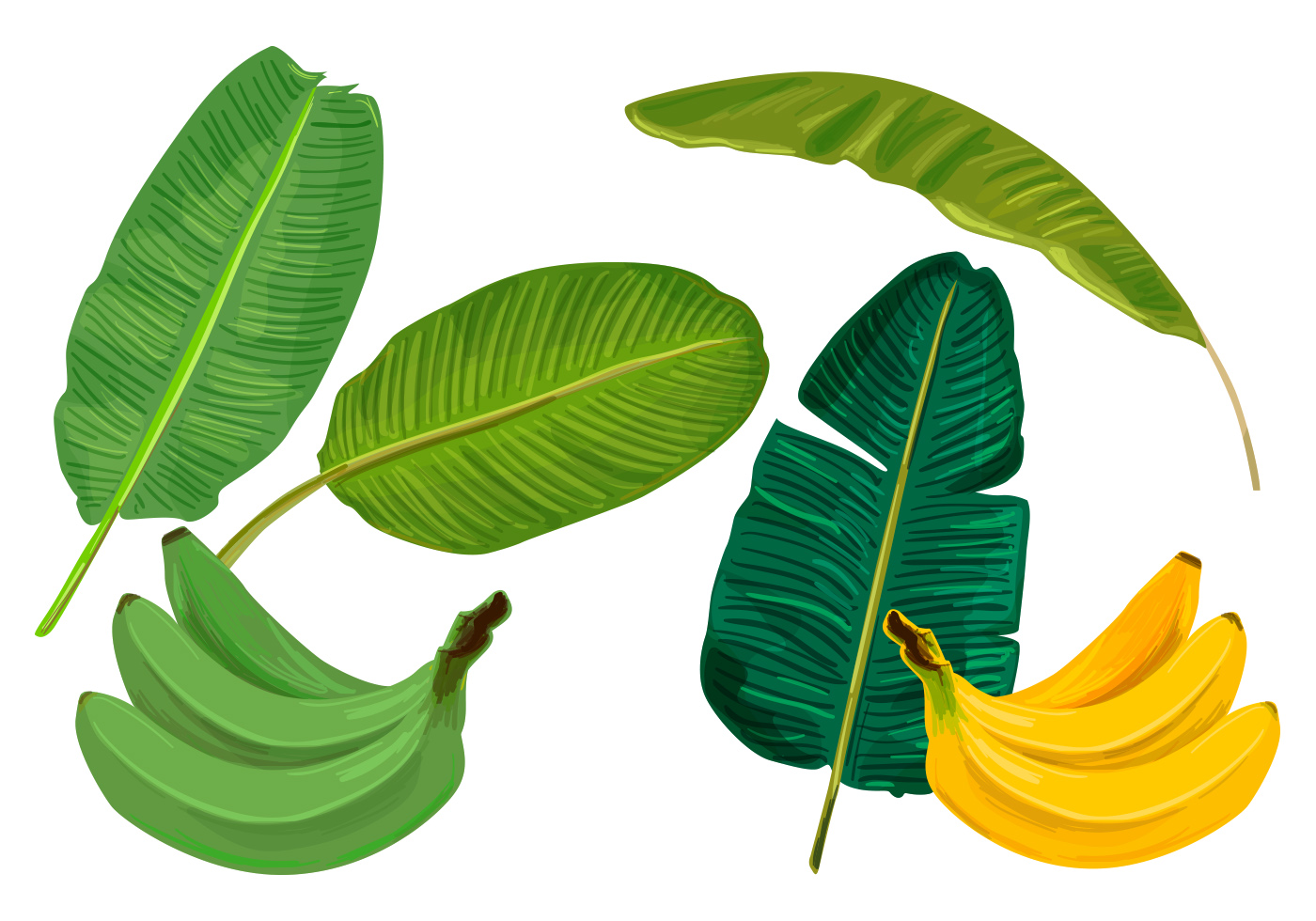... Leaves Vectors - Download Free Vector Art, Stock Graphics & Images