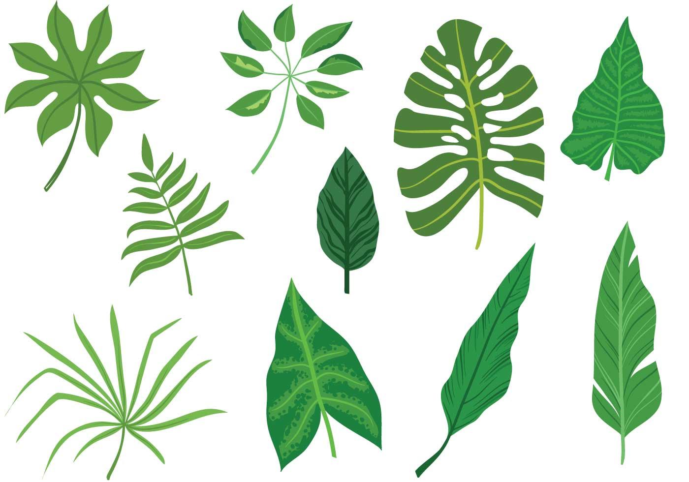 Free-Tropical-Leaves-Vectors - Download Free Vector Art ...