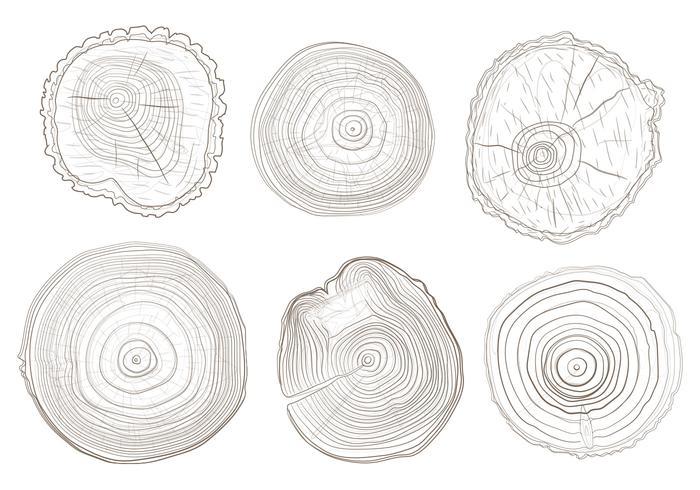 Tree Ring Vectors