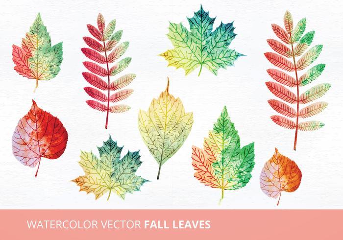 Watercolor Vector Leaves