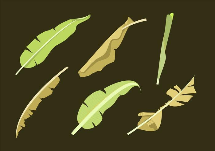 Banana Leaf Vectors