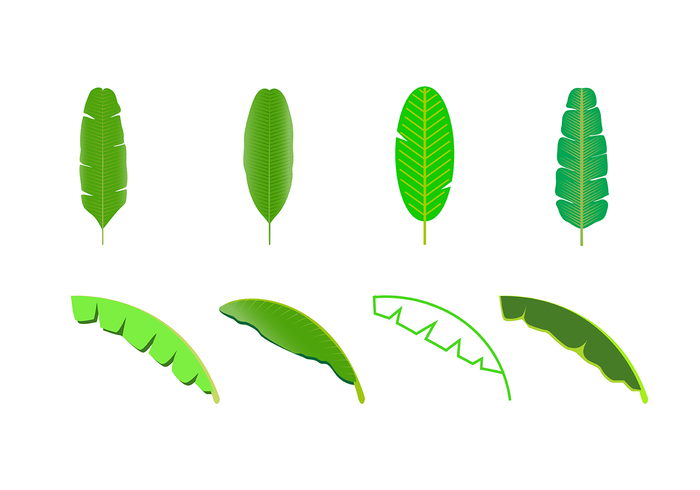 Free Banana Leaf Vector